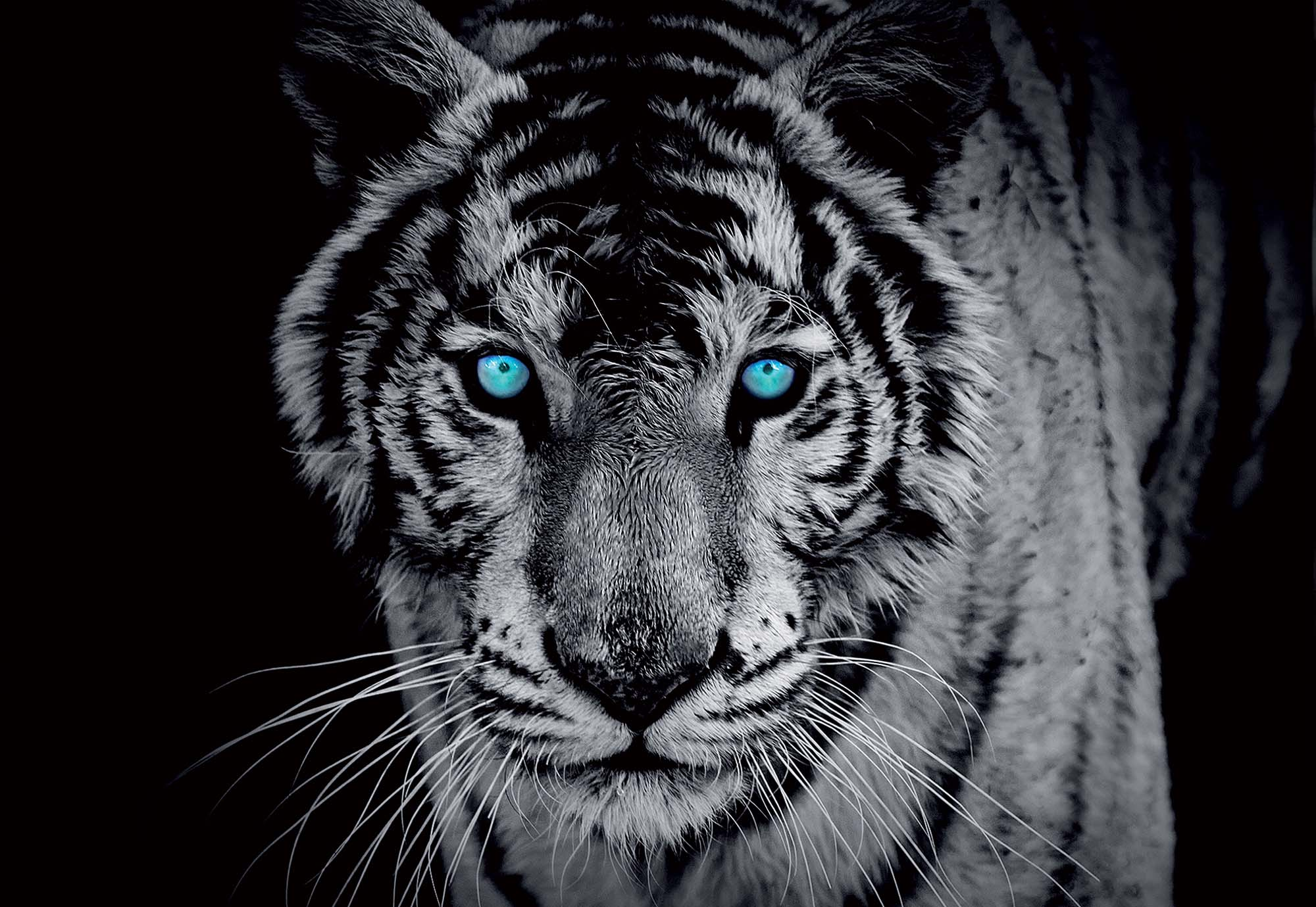 Black And White Tiger Blue Eyes Themes